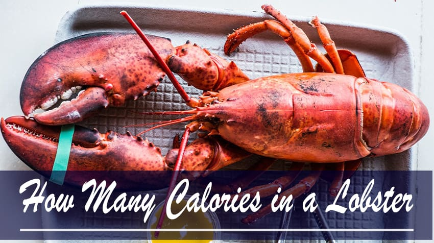 calories in lobster meat